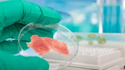 Мяса и зрелищ: как лабораторные волокна заменят говядину и рыбу