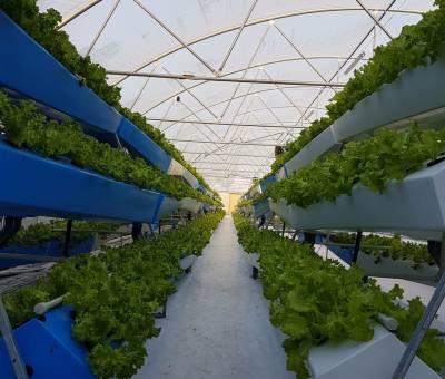 AgroTalks Day: обзор инновационных решений для сельского хозяйства