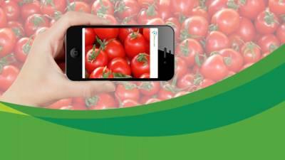 Мобільний додаток Intello Labs використовує штучний інтелект для визначення якості харчових продуктів