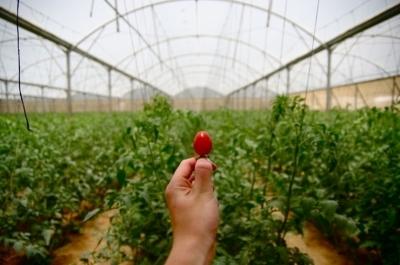 10 интересных фактов о сельском хозяйстве Израиля
