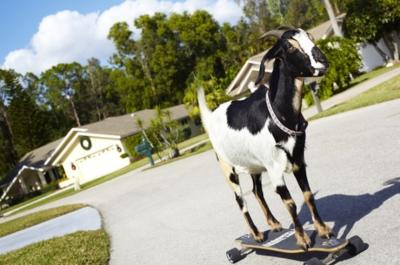 10 странных фермерских достижений в Книге рекордов Гиннесса