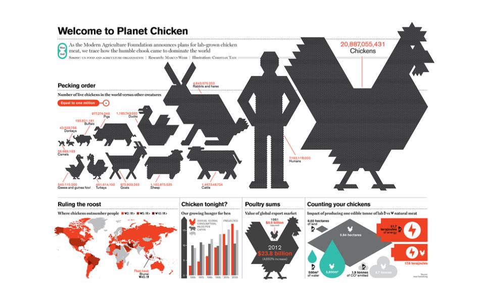Планета кур: 5 неожиданных фактов об этих домашних птицах