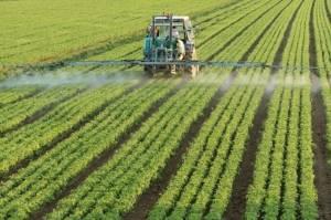 4 коротких совета для эффективной борьбы с сорняками