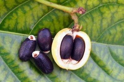 5 растений для биотоплива будущего