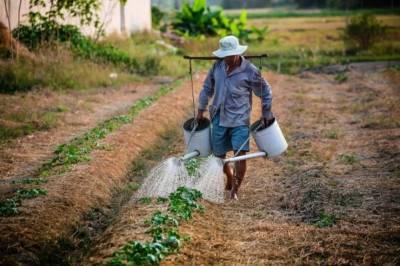 7 естественных инсектицидов для мелких фермеров, которые способны заменить токсичные препараты