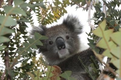 7 интересных фактов о сельском хозяйстве Австралии