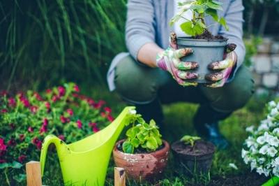Amazon запатентовала онлайн-садовника