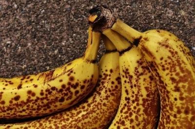 Бананы исчезают из-за коммерческой селекции