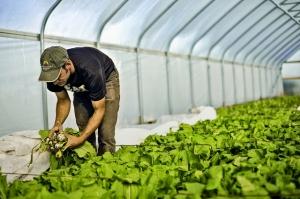 Бережливое производство: чему Toyota может научить фермеров