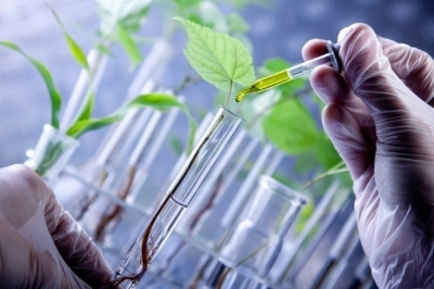 Биотехнологии обеспечивают ежегодный прирост урожая до 2,5%