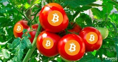 Благодаря теплу от добычи биткоинов в Чехии выращивают 2 га томатов