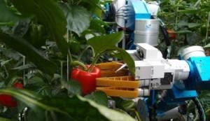 Большой куш: стартап с агророботами сорвал 2,4 миллиона инвестиций
