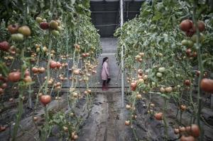 Как Китай пытается предотвратить продовольственный кризис