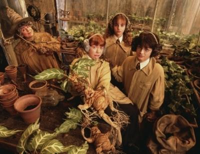 Что выращивать в мире Гарри Поттера?