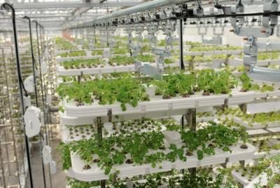 Cтартап привлек $20 млн на строительство вертикальных ферм будущего