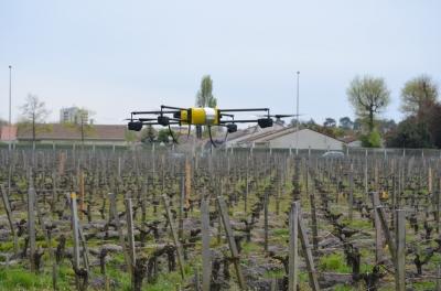 Дроны на службе виноградников