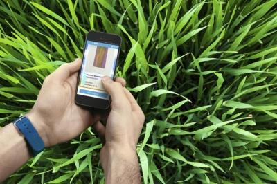 Эксперт Syngenta назвал главные вызовы для искусственного интеллекта в агросекторе