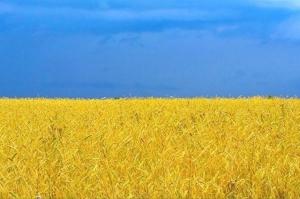 ЕС может перехватить рынок украинских зерновых у Китая