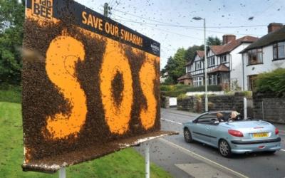 Евросоюз запретили неоникотиноиды ради спасения пчел. Почти