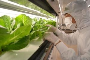 Гидропоника под землей: как токийское метро выращивает салат