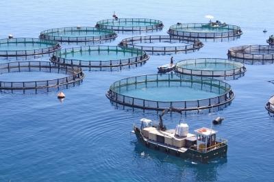 Главный обзор рынка акватехнологий