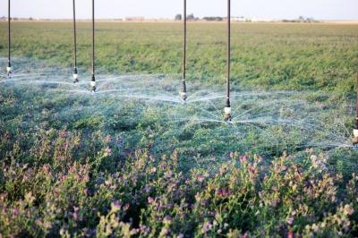 Исследователи объяснили, как разные системы орошения влияют на урожай