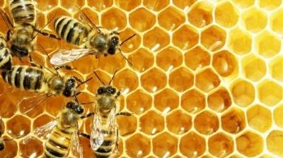 Роботы-пчелы будут помогать настоящим насекомым выжить