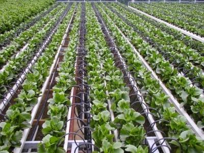 Японские компании продвигают технологии умного фермерства по всему миру