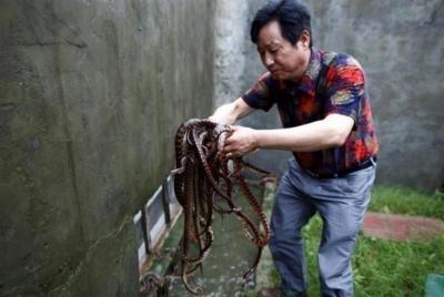 Как бизнес на змеях превратил жителей китайской деревни в миллионеров
