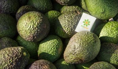 Как Hazel Technologies дольше сохраняет фрукты и овощи свежими