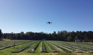 Как «летающие технологии» меняют выращивание ягод