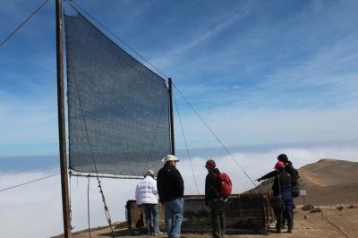 Как получить воду для орошения из тумана?