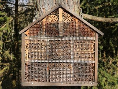 Как построить пчелиный отель
