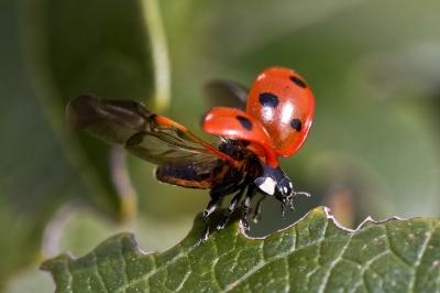 8 насекомых, которых выращивают для кулинарии и промышленности