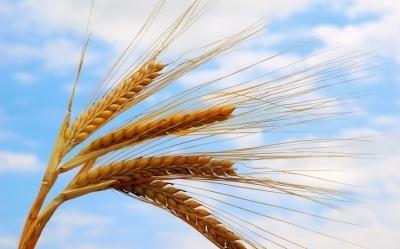 Лайфхаки и перспективы 2018 года для производства зерновых