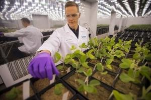 Микробы помогут увеличить урожай — стартап Indigo Agriculture