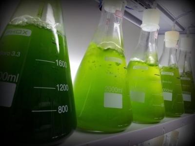 Новая биомикстура накормит голодающих и очистит атмосферу