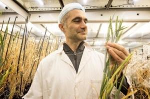 Новая технология втрое ускорит селекцию сельскохозяйственных культур