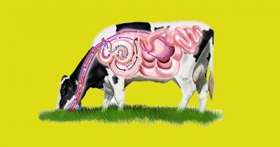 ДНК-анализ желудка коров поможет производству мяса и молока — ученые