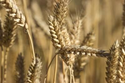 Откуда взялись такие цены? 6 факторов, которые влияют на стоимость зерновых