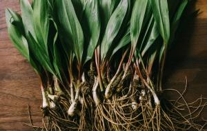 5 полезных многолетних растений, которые смогут вырастить все