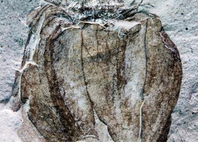 Предкам помидоров оказалось больше 50 миллионов лет