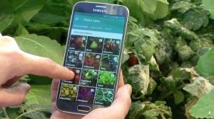 Приложение диагностирует больше 60 болезней растений, анализируя фотографии