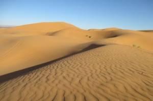 Проект Sahara Forest: песчаные дюны станут фермами, а пустыни озеленят