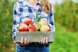 Производство яблок в Украине однозначно может быть прибыльным — Андрей Ярмак, ФАО