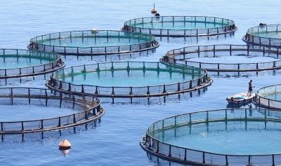 Растения и насекомые — почему это будущее кормов для рыбы