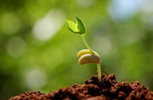 Растения способны определять оптимальные условия для прорастания