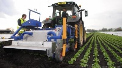 Разработан прототип робота, который может исключить использование гербицидов