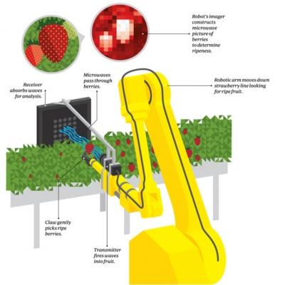 Робот, который собирает самую спелую и вкусную клубнику