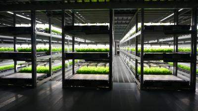 Роботизированные вертикальные фермы решат проблему нехватки овощей на Ближнем Востоке?